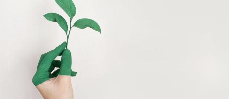 Nachhaltigkeit in der Schule